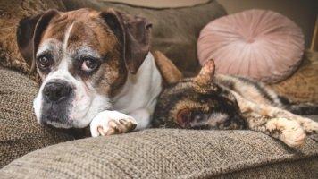 Demenz bei Hund und Katze