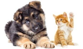 Grundausstattung für Kätzchen und Welpen